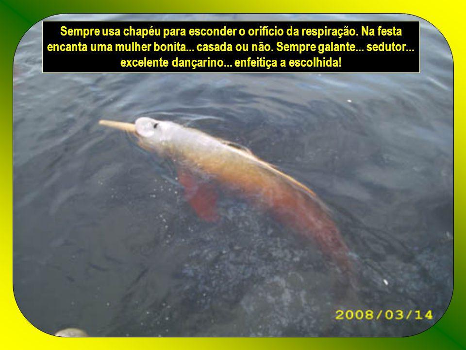 Conta a lenda que ao entardecer na Amazônia...o boto cor-de-rosa abandona seu habitat...