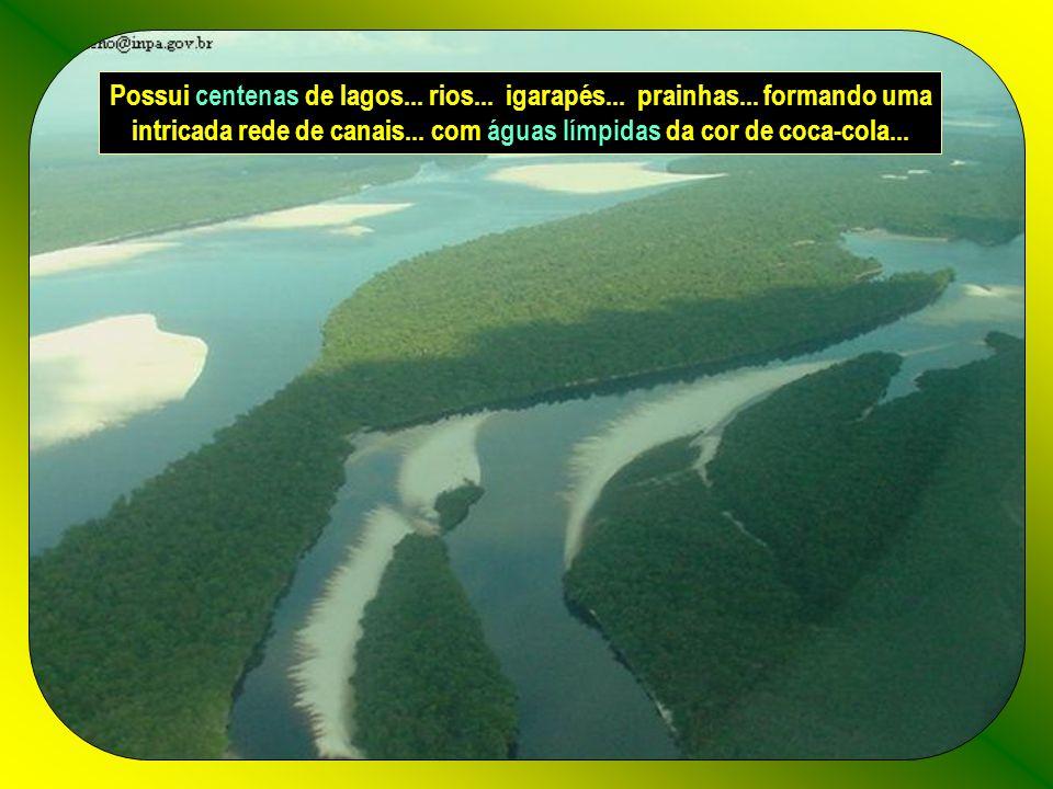 É a estação Ecológica das Anavilhanas... o maior arquipélago fluvial do Mundo... com aproximadamente 400 ilhas de forma alongada... cobertas pela Flor