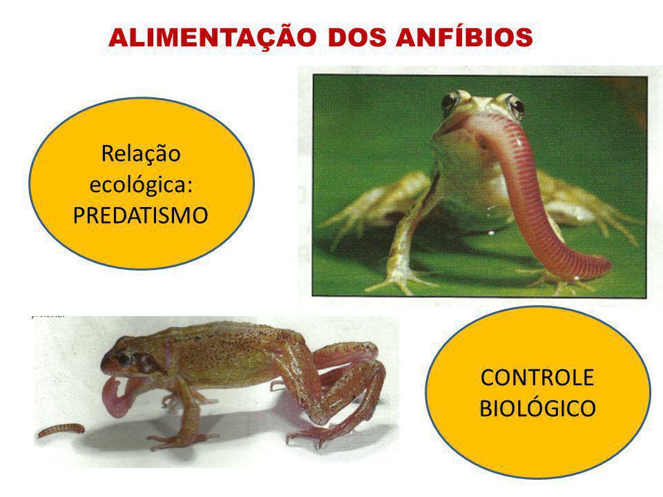 ALIMENTAÇÃO DOS ANFÍBIOS Relação ecológica: PREDATISMO CONTROLE BIOLÓGICO