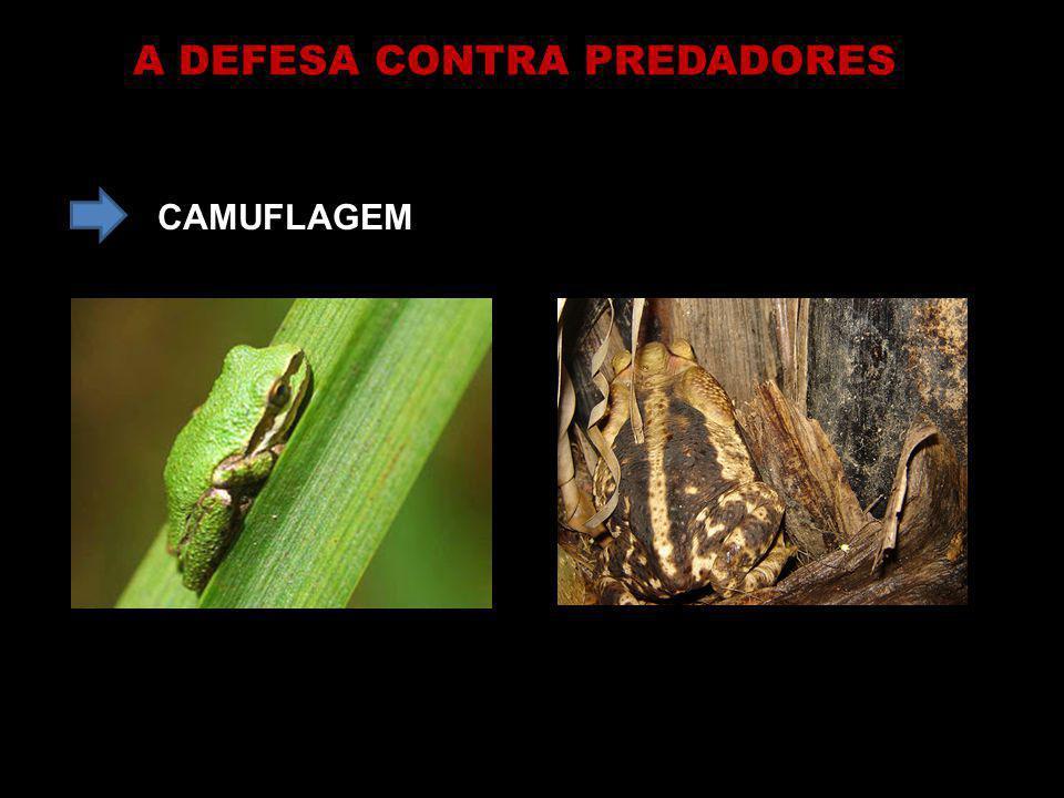 A DEFESA CONTRA PREDADORES CAMUFLAGEM