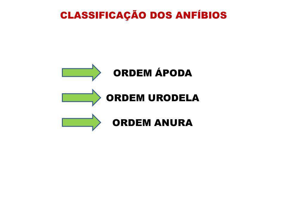 CLASSIFICAÇÃO DOS ANFÍBIOS ORDEM ÁPODA ORDEM URODELA ORDEM ANURA