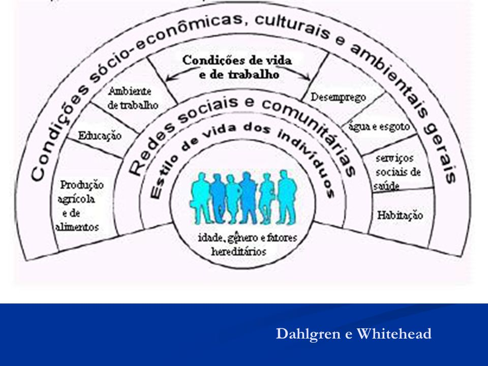 Dahlgren e Whitehead