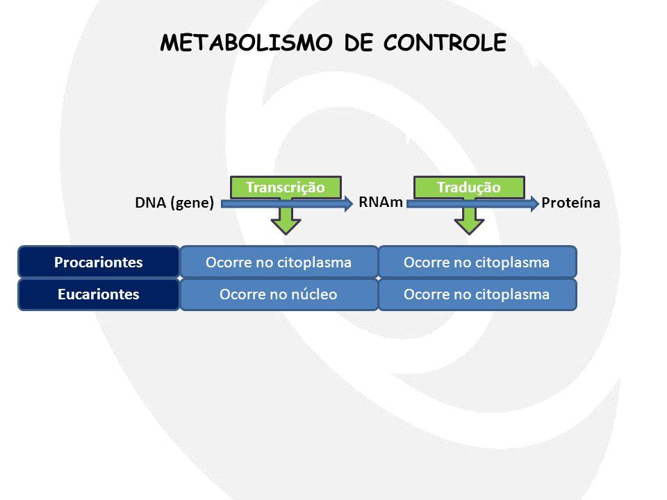METABOLISMO DE CONTROLE DNA (gene) RNAm Proteína TranscriçãoTradução ProcariontesOcorre no citoplasma EucariontesOcorre no núcleoOcorre no citoplasma