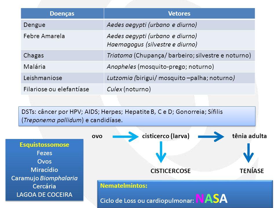 DoençasVetores DengueAedes aegypti (urbano e diurno) Febre AmarelaAedes aegypti (urbano e diurno) Haemagogus (silvestre e diurno) ChagasTriatoma (Chup
