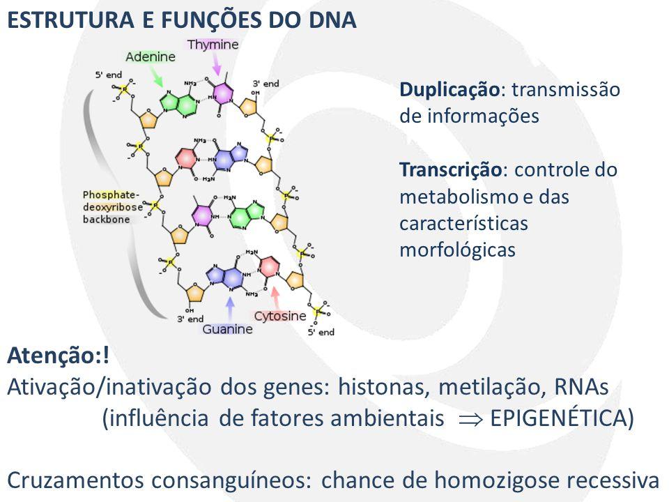 ESTRUTURA E FUNÇÕES DO DNA Atenção:! Ativação/inativação dos genes: histonas, metilação, RNAs (influência de fatores ambientais  EPIGENÉTICA) Cruzame
