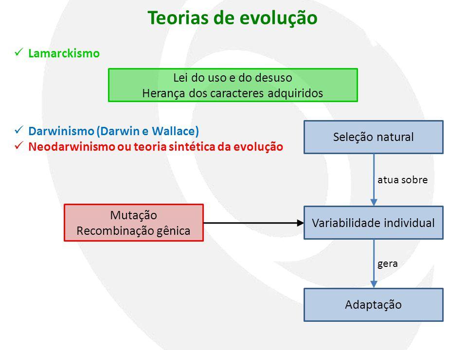 Teorias de evolução Mutação Recombinação gênica Variabilidade individual Seleção natural Adaptação atua sobre gera  Lamarckismo  Darwinismo (Darwin