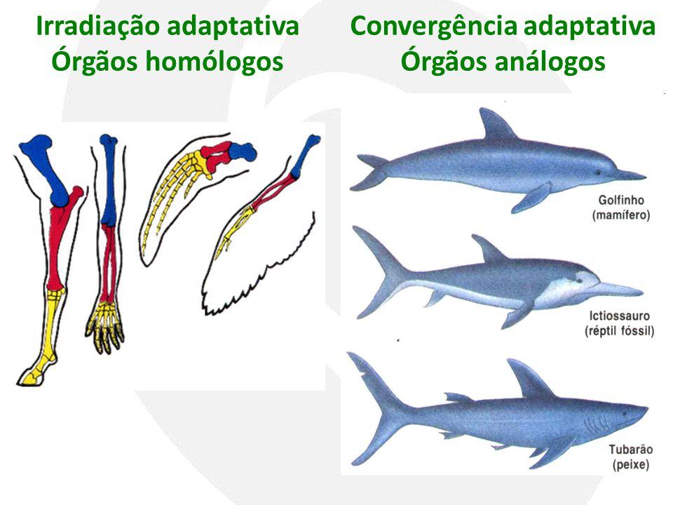 Irradiação adaptativa Órgãos homólogos Convergência adaptativa Órgãos análogos