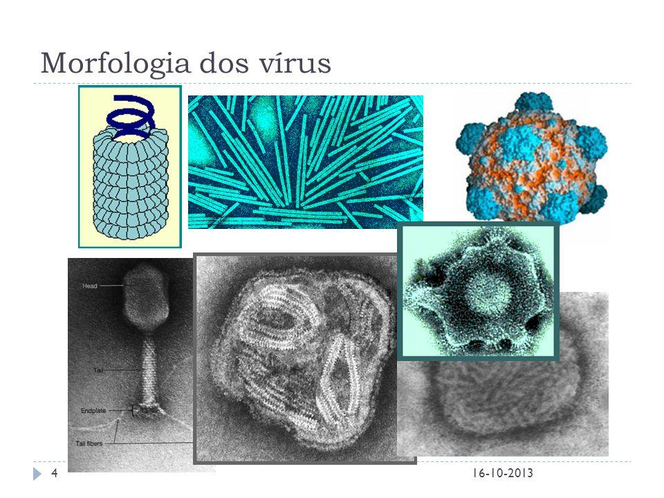 Morfologia dos vírus 16-10-20134