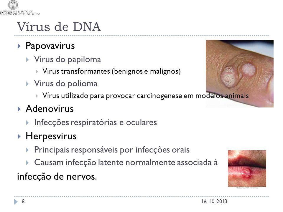 Vírus de DNA  Papovavirus  Virus do papiloma  Virus transformantes (benignos e malignos)  Virus do polioma  Vírus utilizado para provocar carcino