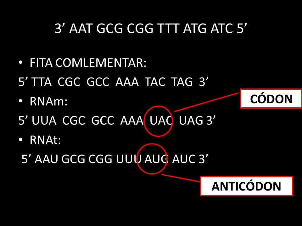 • FITA COMLEMENTAR: 5' TTA CGC GCC AAA TAC TAG 3' • RNAm: 5' UUA CGC GCC AAA UAC UAG 3' • RNAt: 5' AAU GCG CGG UUU AUG AUC 3' 3' AAT GCG CGG TTT ATG A