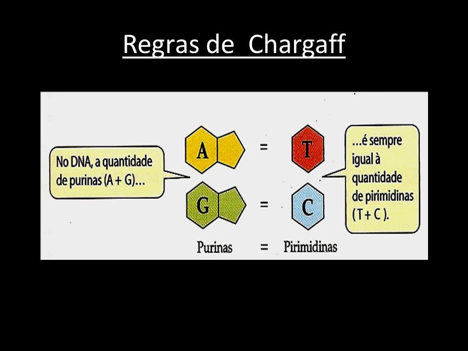 Cristalografia de Raio X → Revelou a natureza helicoidal básica da estrutura do DNA