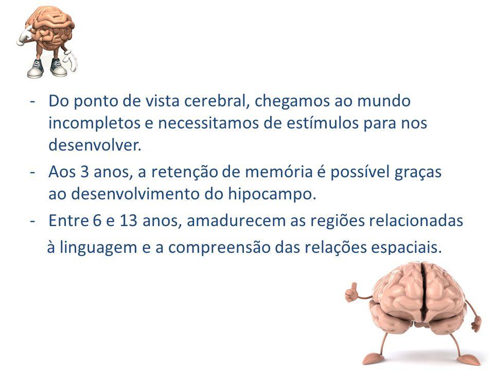 -Do ponto de vista cerebral, chegamos ao mundo incompletos e necessitamos de estímulos para nos desenvolver. -Aos 3 anos, a retenção de memória é poss