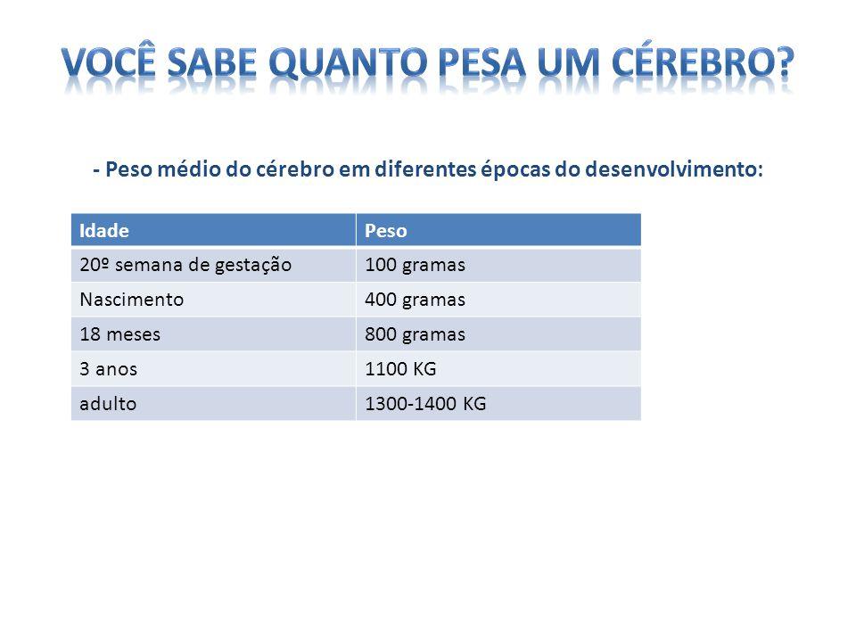 - Peso médio do cérebro em diferentes épocas do desenvolvimento: IdadePeso 20º semana de gestação100 gramas Nascimento400 gramas 18 meses800 gramas 3 anos1100 KG adulto1300-1400 KG