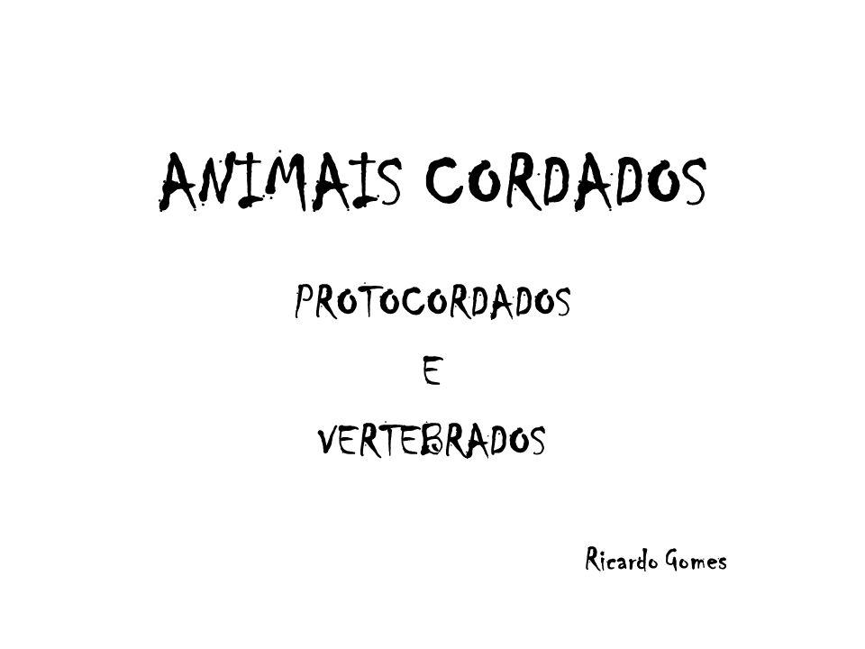 ANIMAIS CORDADOS PROTOCORDADOS E VERTEBRADOS Ricardo Gomes