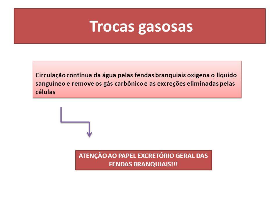 Trocas gasosas Circulação contínua da água pelas fendas branquiais oxigena o líquido sanguíneo e remove os gás carbônico e as excreções eliminadas pel