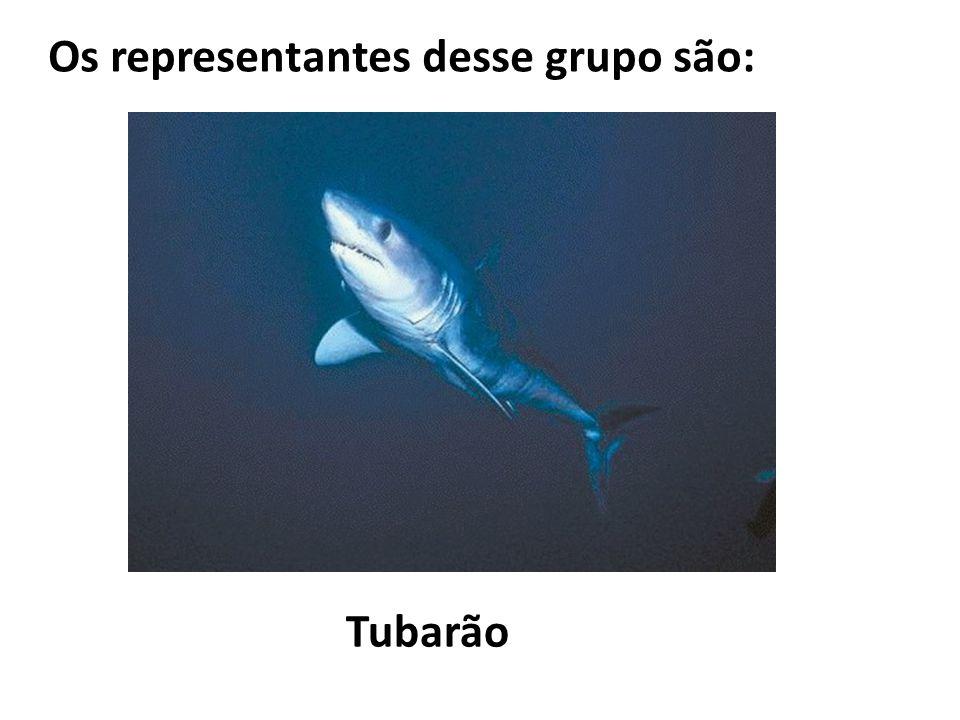Os representantes desse grupo são: Tubarão