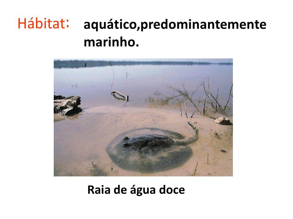 Hábitat : aquático,predominantemente marinho. Raia de água doce