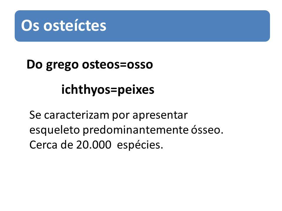 Os osteíctes Do grego osteos=osso ichthyos=peixes Se caracterizam por apresentar esqueleto predominantemente ósseo. Cerca de 20.000 espécies.