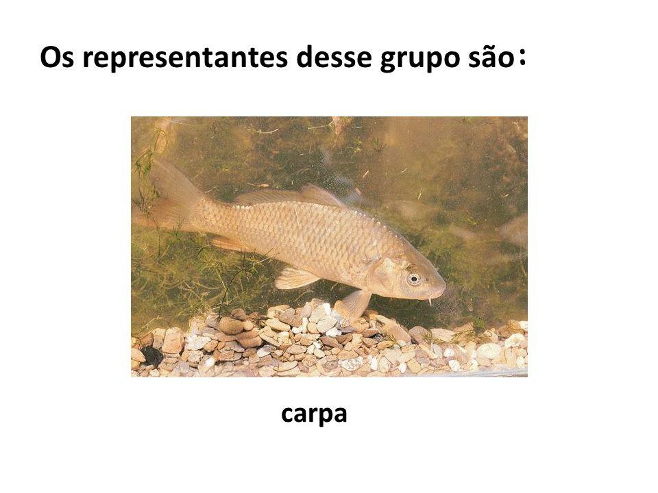 Os representantes desse grupo são : carpa