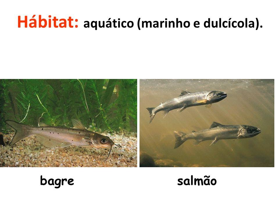 Hábitat: aquático (marinho e dulcícola). bagresalmão