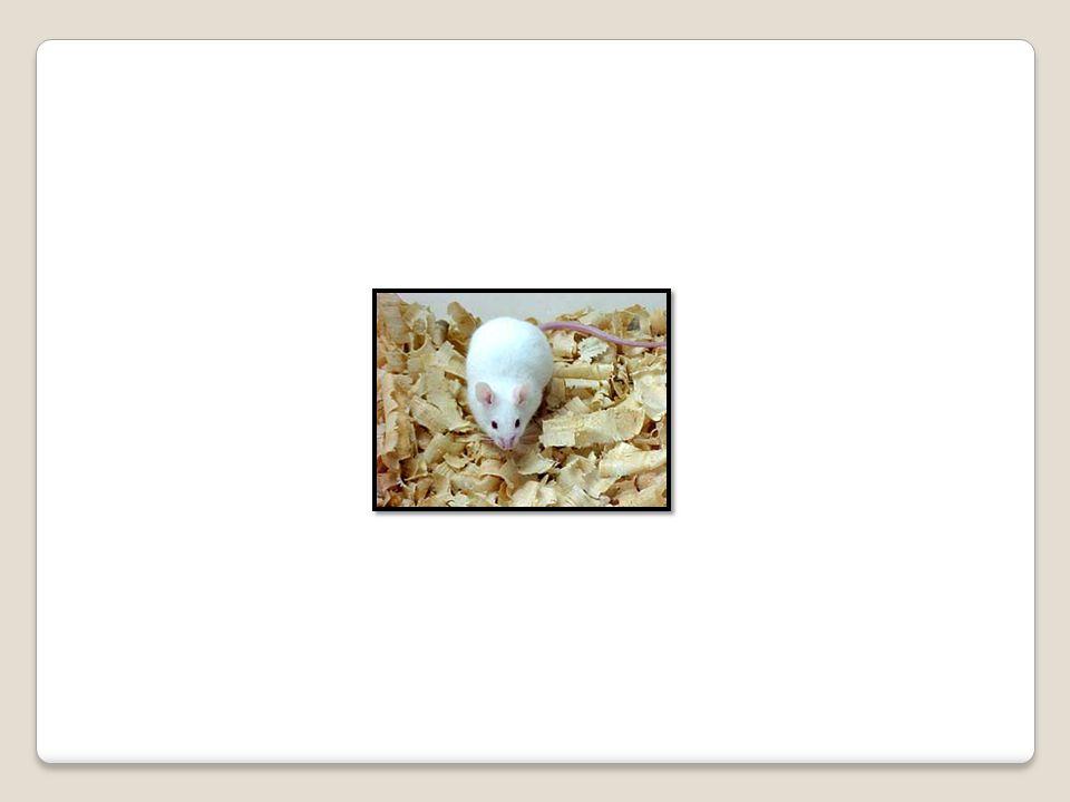 A3  peças anatômicas do ser humano;  produto de fecundação sem sinais vitais, com peso menor que 500 gramas ou estatura menor que 25 centímetros ou idade gestacional menor que 20 semanas, que não tenham valor científico ou legal e não tenha havido requisição pelo paciente ou familiares.
