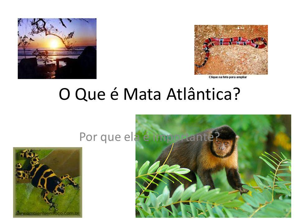 O Que é Mata Atlântica? Por que ela é importante?