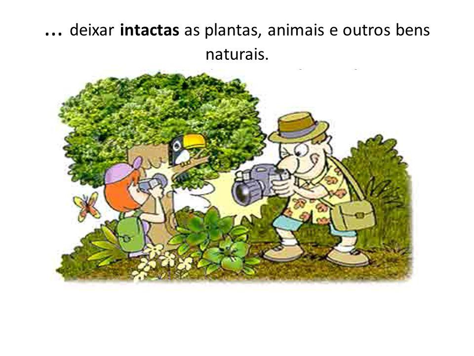 ... deixar intactas as plantas, animais e outros bens naturais. Para suas recordações, tire fotografias.