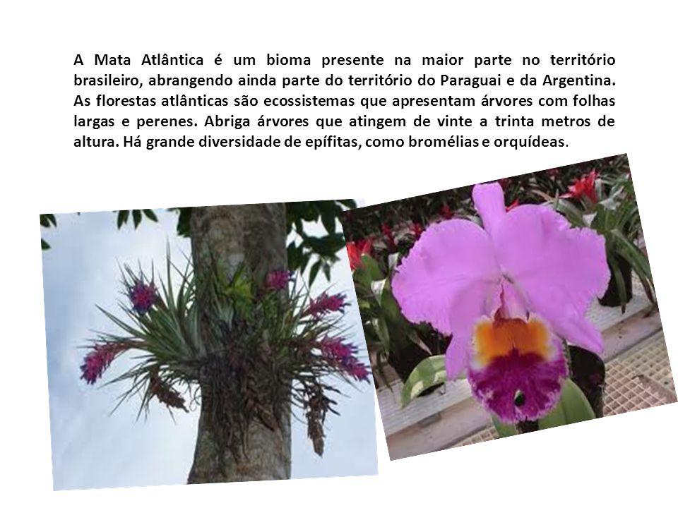 A Mata Atlântica é um bioma presente na maior parte no território brasileiro, abrangendo ainda parte do território do Paraguai e da Argentina. As flor