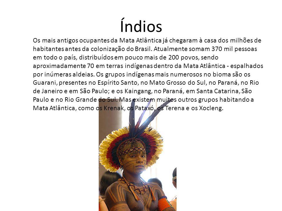 Índios Os mais antigos ocupantes da Mata Atlântica já chegaram à casa dos milhões de habitantes antes da colonização do Brasil. Atualmente somam 370 m