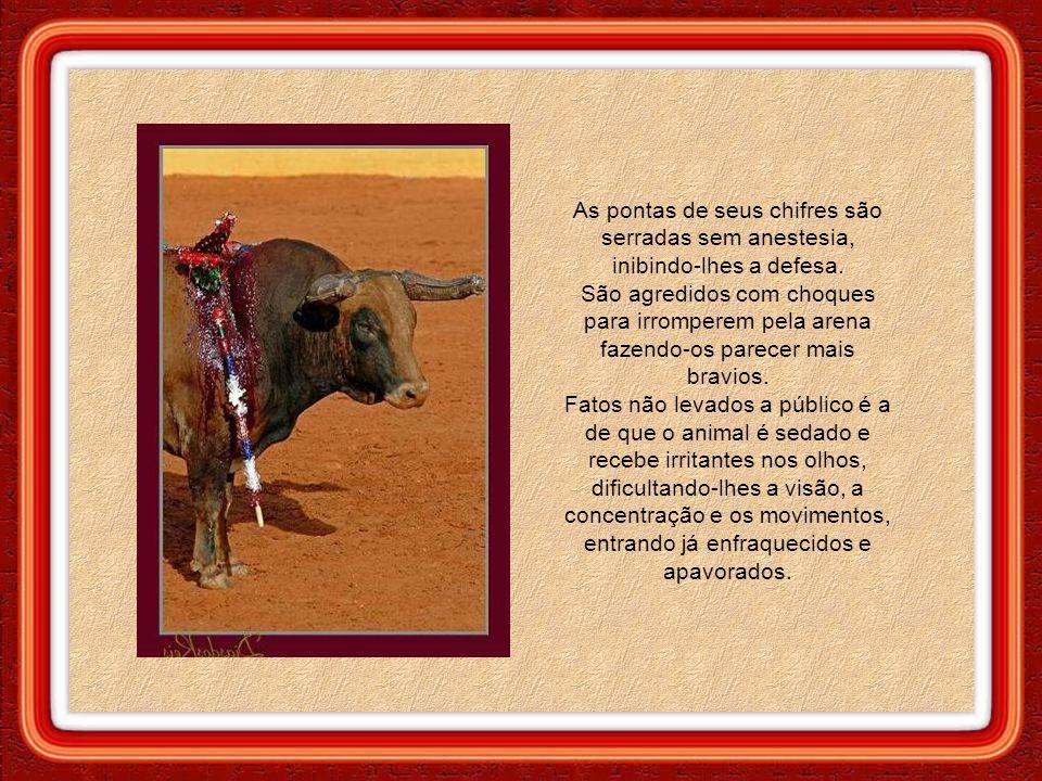 Os animais são vítimas de um espetáculo com características extraordinariamente cruéis. O sofrimento dos touros começa quando são retirados de seu hab