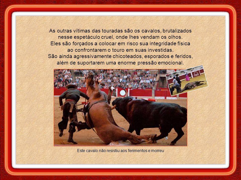"""A orelha do touro é cortada como prova de """"bravura"""" do toureiro. Após, o animal é retirado da arena por dois cavalos e levado ao frigorífico. Assim te"""