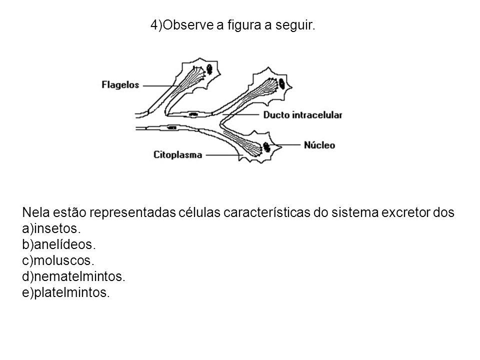 4)Observe a figura a seguir. Nela estão representadas células características do sistema excretor dos a)insetos. b)anelídeos. c)moluscos. d)nematelmin