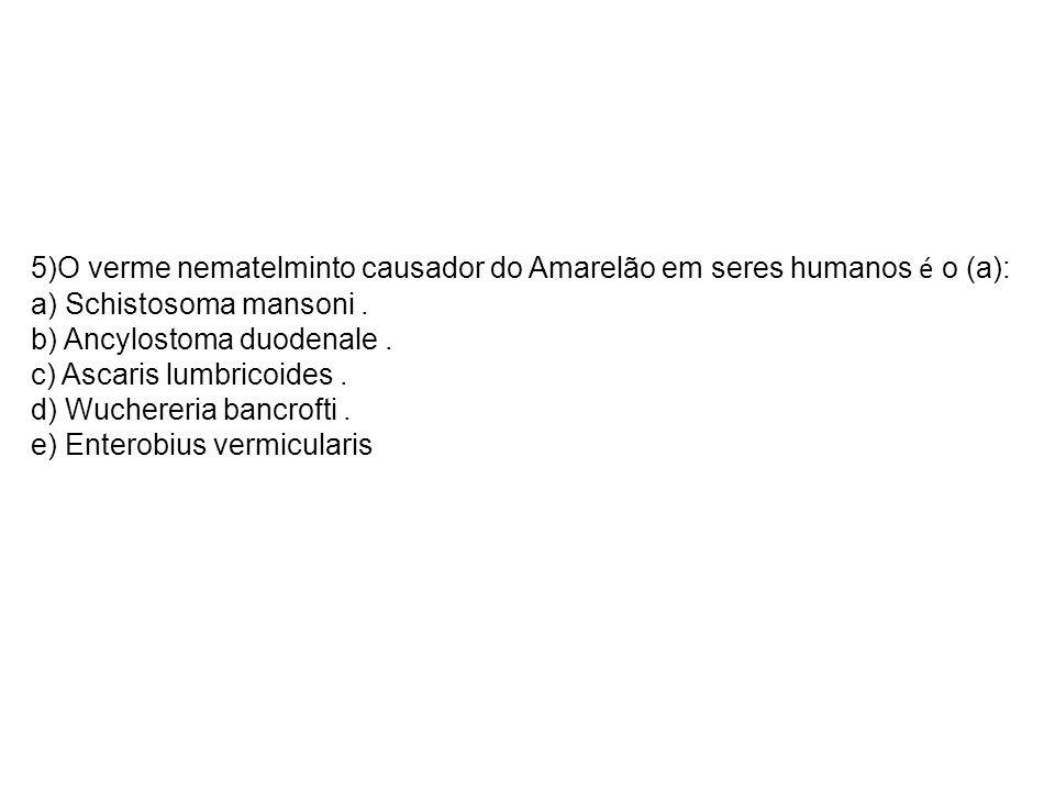 5)O verme nematelminto causador do Amarelão em seres humanos é o (a): a) Schistosoma mansoni. b) Ancylostoma duodenale. c) Ascaris lumbricoides. d) Wu