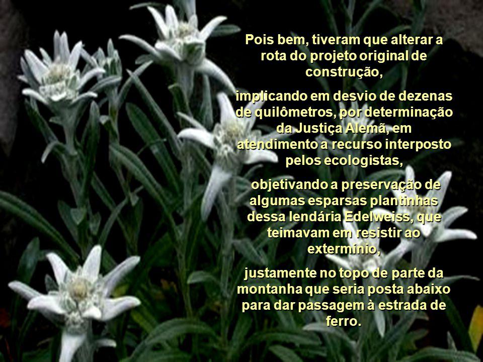 Durante séculos essa flor inspirou poetas, pintores e artistas e até o século XVI ou XVII, no auge das dinastias e monarquias alemãs, a Edelweiss foi