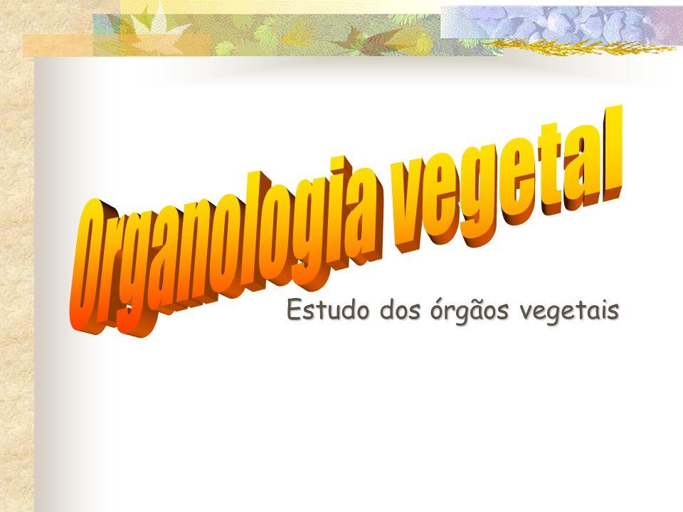 OLHA O ERRO