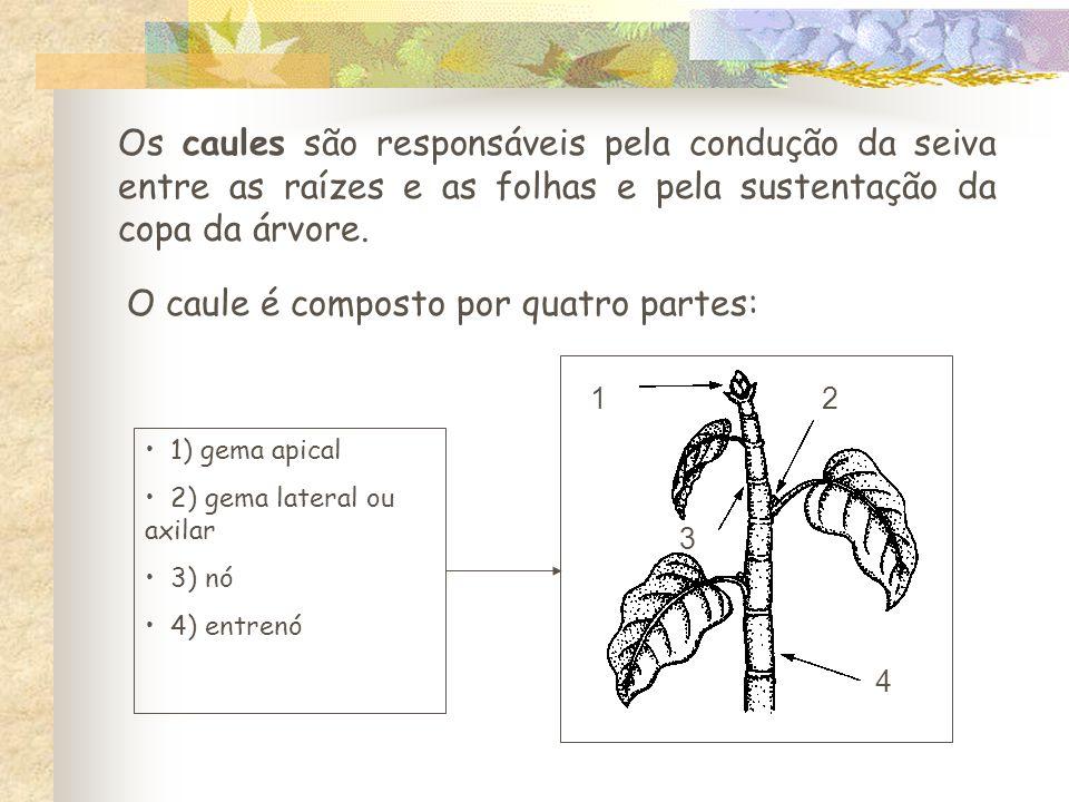 Os caules são responsáveis pela condução da seiva entre as raízes e as folhas e pela sustentação da copa da árvore.
