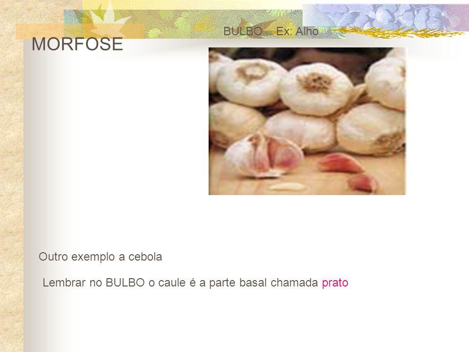 MORFOSE BULBO Ex: Alho Outro exemplo a cebola Lembrar no BULBO o caule é a parte basal chamada prato