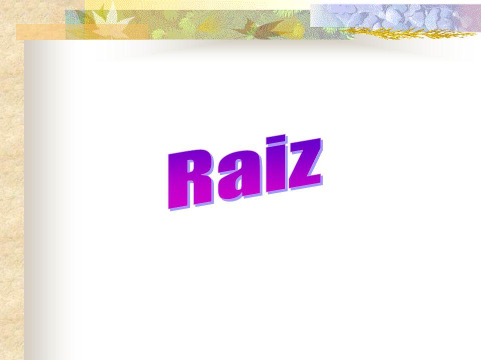 RAIZ Conceito – É um órgão vegetativo, geralmente subterrâneo, apresenta Geotropismo positivo e fototropismo negativo.