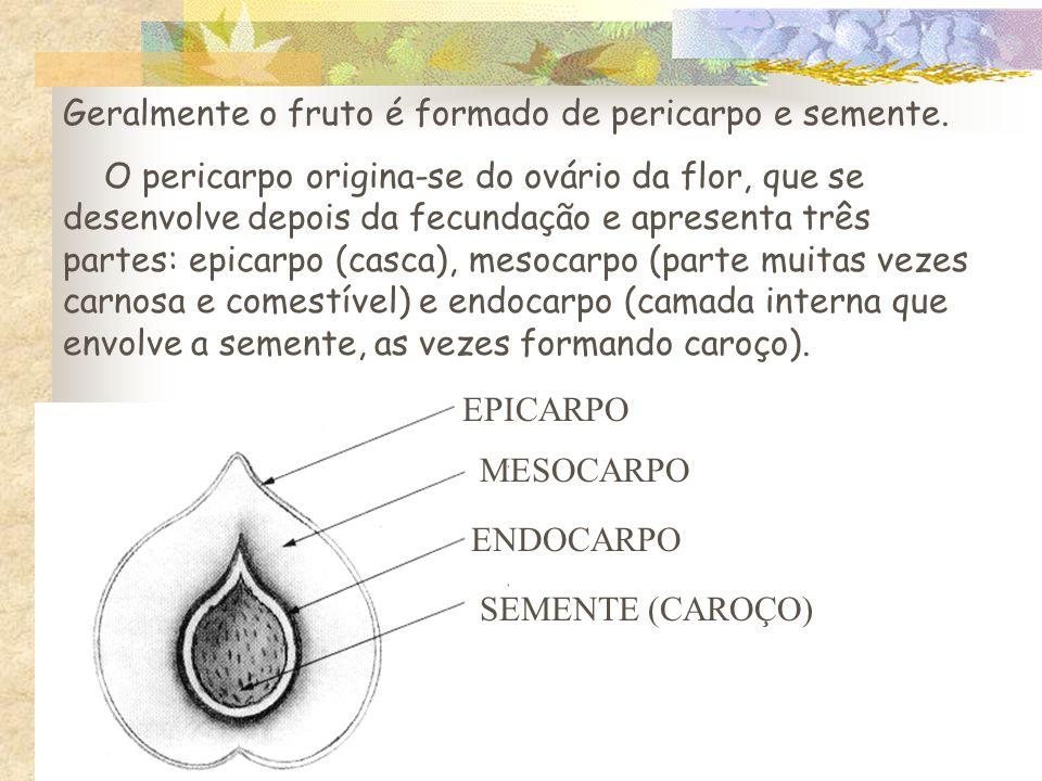 Geralmente o fruto é formado de pericarpo e semente.