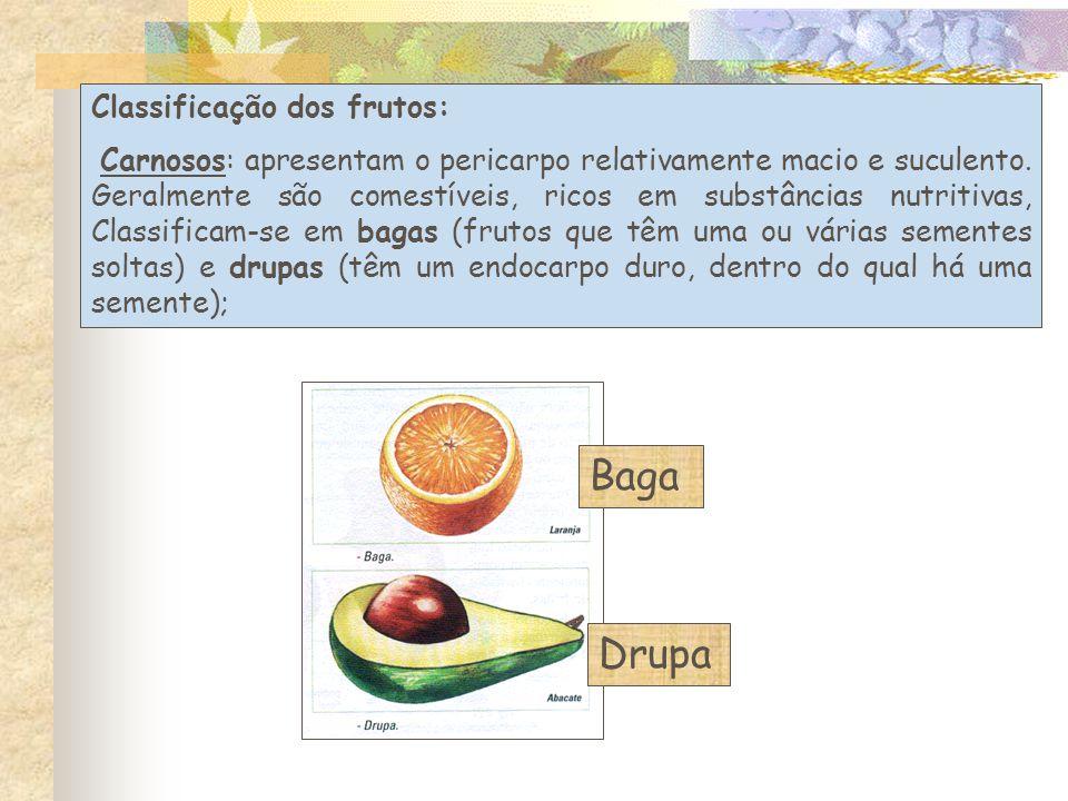 Classificação dos frutos: Carnosos: apresentam o pericarpo relativamente macio e suculento.