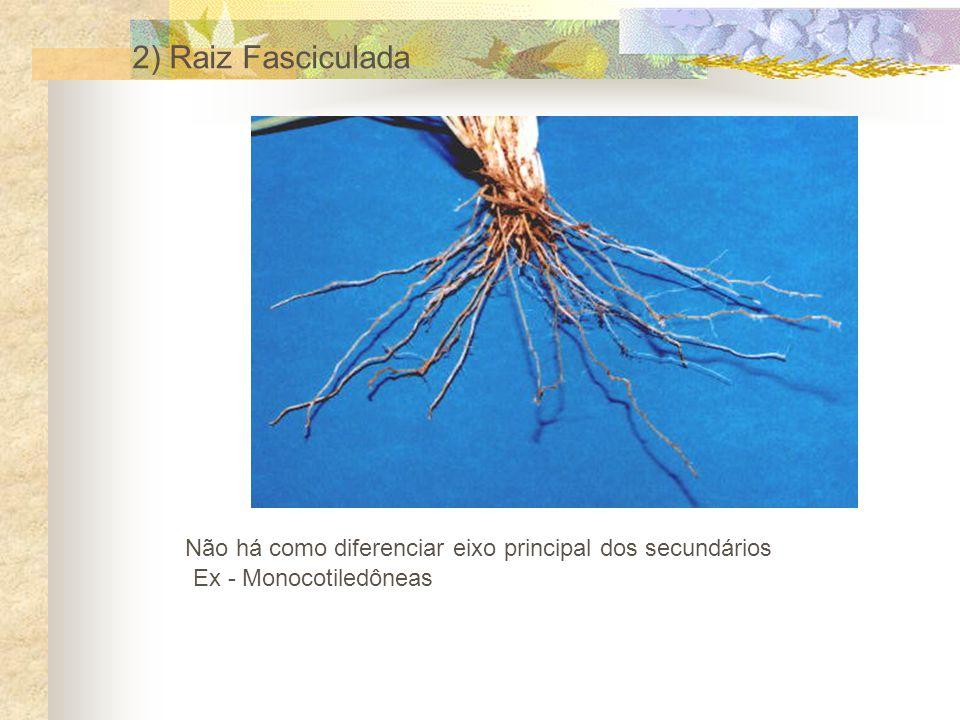 O conjunto de todas as raízes de uma planta é chamado de sistema radicular.