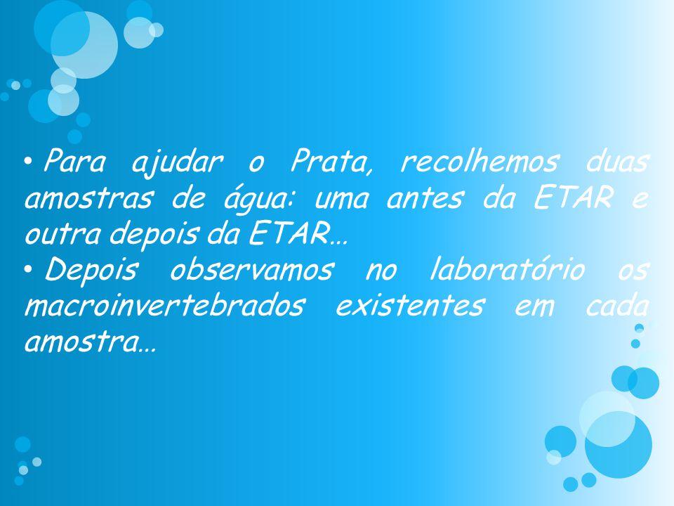 • Para ajudar o Prata, recolhemos duas amostras de água: uma antes da ETAR e outra depois da ETAR… • Depois observamos no laboratório os macroinverteb