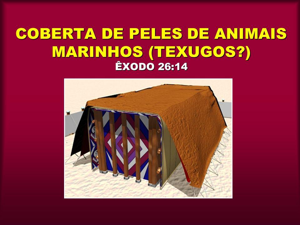 COBERTA DE PELES DE ANIMAIS MARINHOS (TEXUGOS?) ÊXODO 26:14