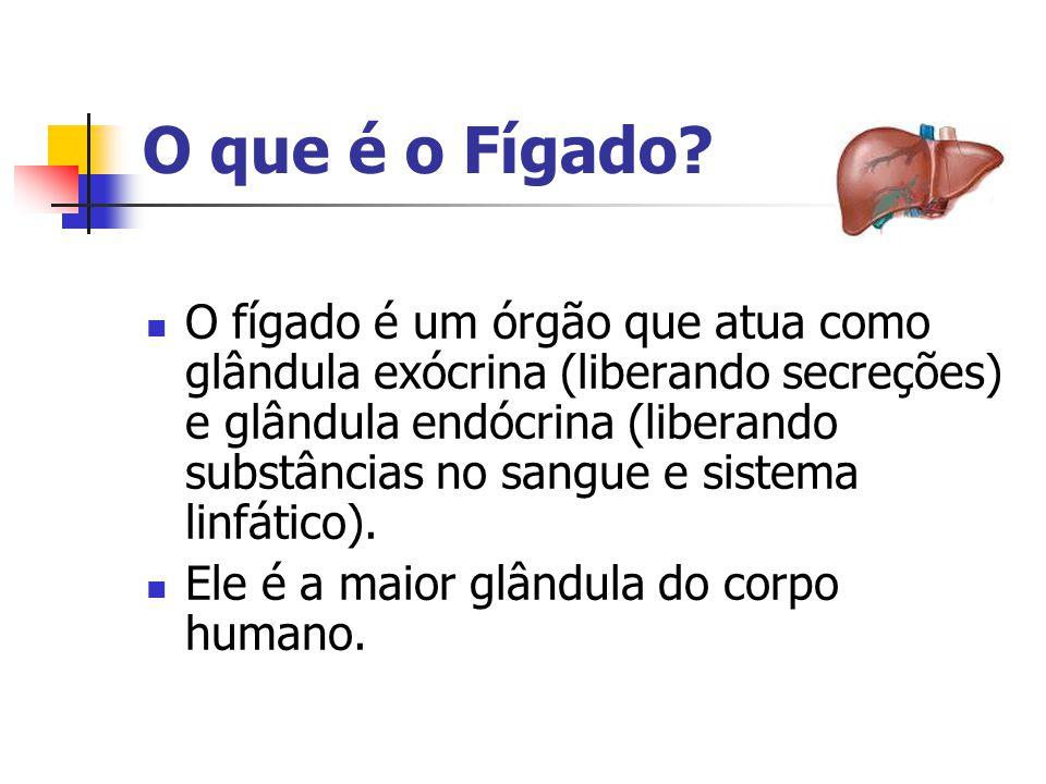 O que é o Fígado?  O fígado é um órgão que atua como glândula exócrina (liberando secreções) e glândula endócrina (liberando substâncias no sangue e