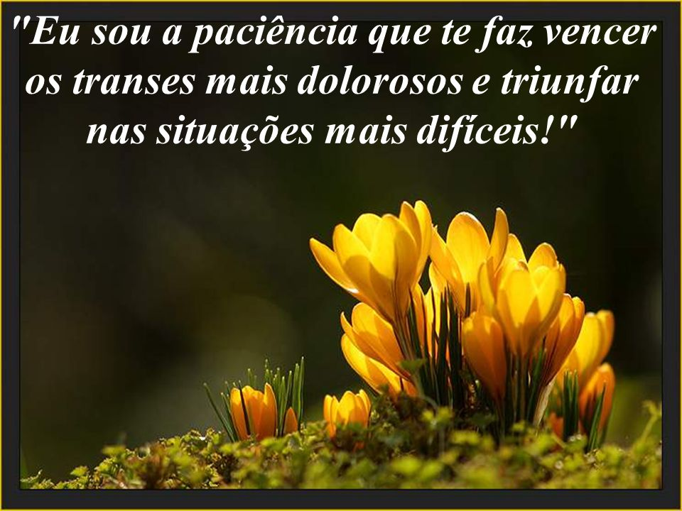 Eu sou a paciência que te faz vencer os transes mais dolorosos e triunfar nas situações mais difíceis!