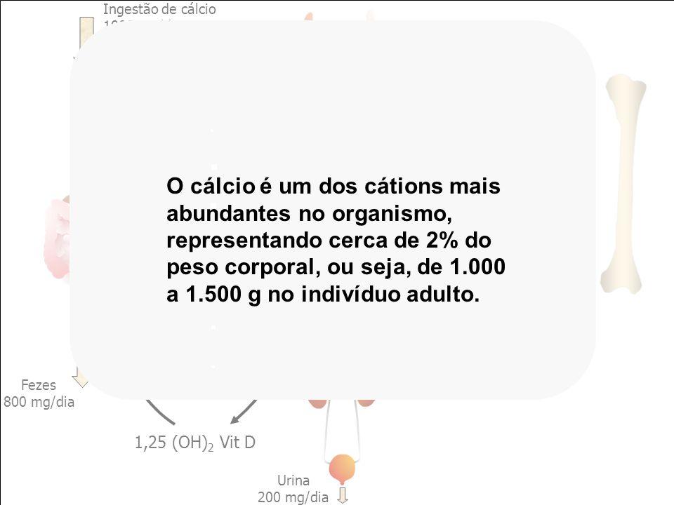 CÁLCIO EXTRACELULAR Ingestão de cálcio 1000 mg/dia Fezes 800 mg/dia Absorção 300 mg/dia Secreção 100 mg/dia PTH Reabsorção 500 mg/dia Filtração 10.000