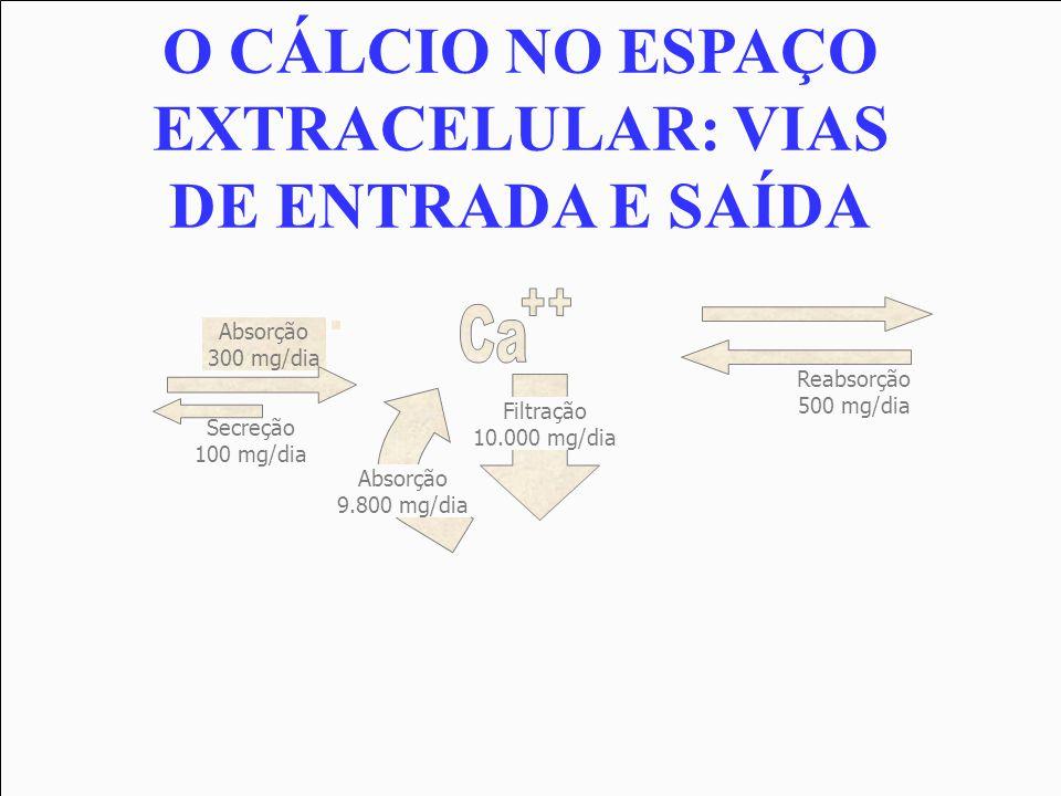 Absorção 300 mg/dia Secreção 100 mg/dia Reabsorção 500 mg/dia Filtração 10.000 mg/dia Absorção 9.800 mg/dia O CÁLCIO NO ESPAÇO EXTRACELULAR: VIAS DE E