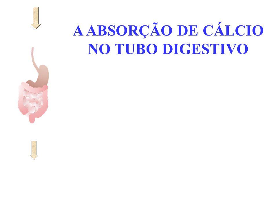 A ABSORÇÃO DE CÁLCIO NO TUBO DIGESTIVO