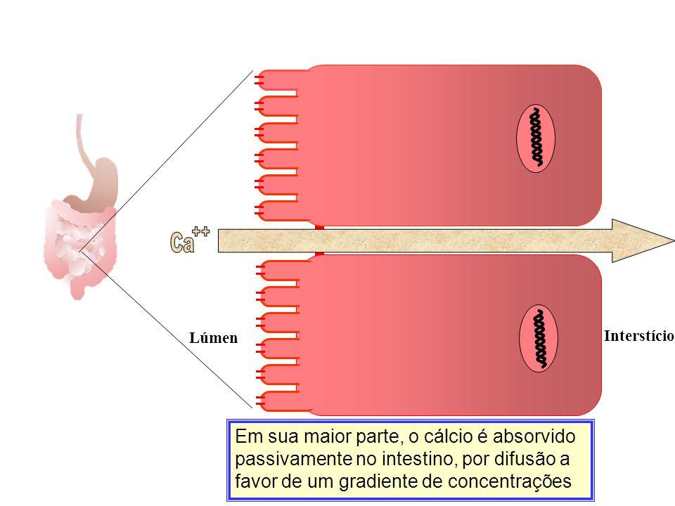Em sua maior parte, o cálcio é absorvido passivamente no intestino, por difusão a favor de um gradiente de concentrações Ca Lúmen Interstício