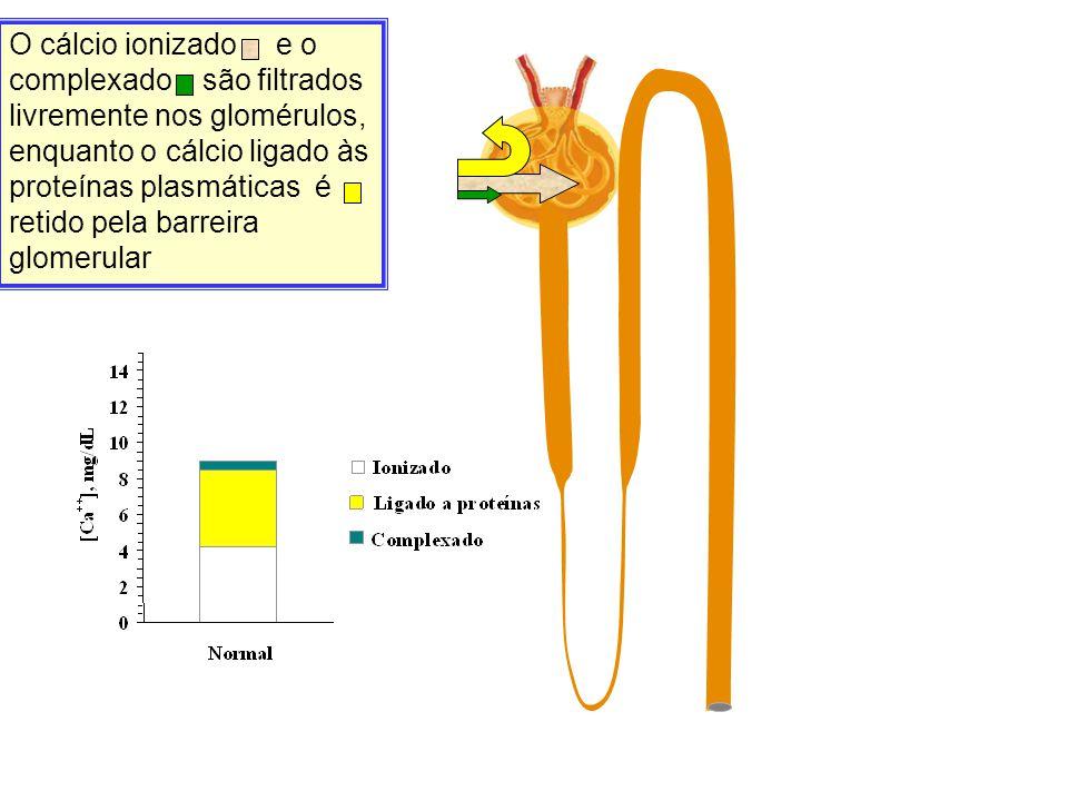 O cálcio ionizado e o complexado são filtrados livremente nos glomérulos, enquanto o cálcio ligado às proteínas plasmáticas é retido pela barreira glo